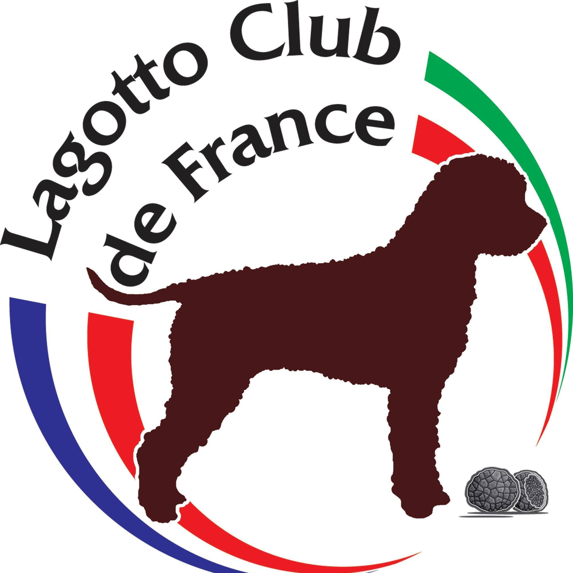 RE Lagotto